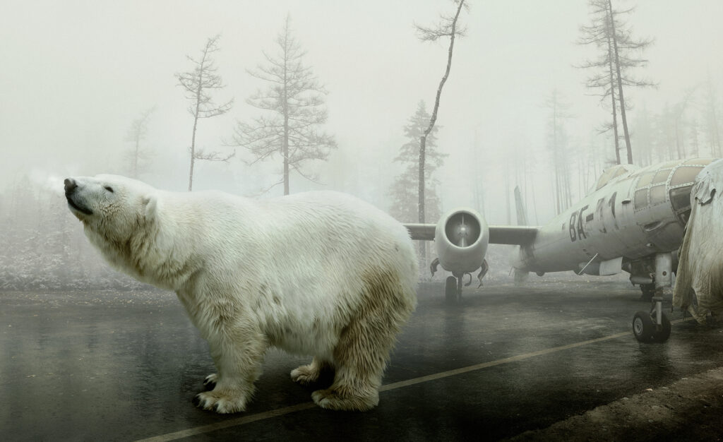 Bear with a plane in the background